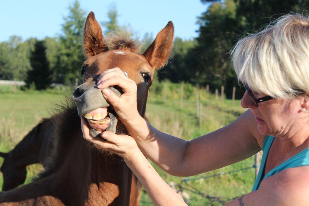 Onko hevosella huumorintajua?