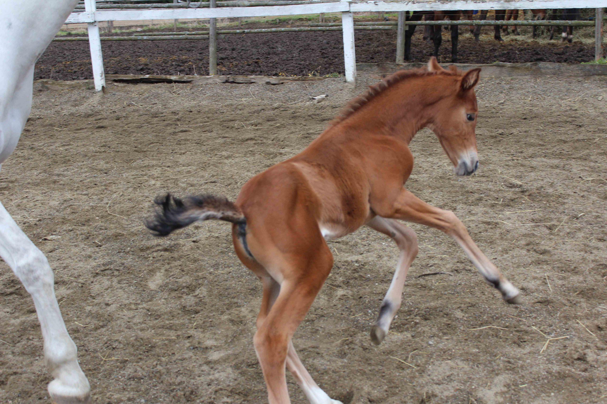 Toivepostaus: Mistä tiedän minkä hevosen ostan ja mitä sitten